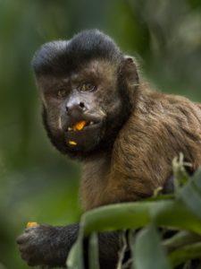 Amazonia, Luc Marescot